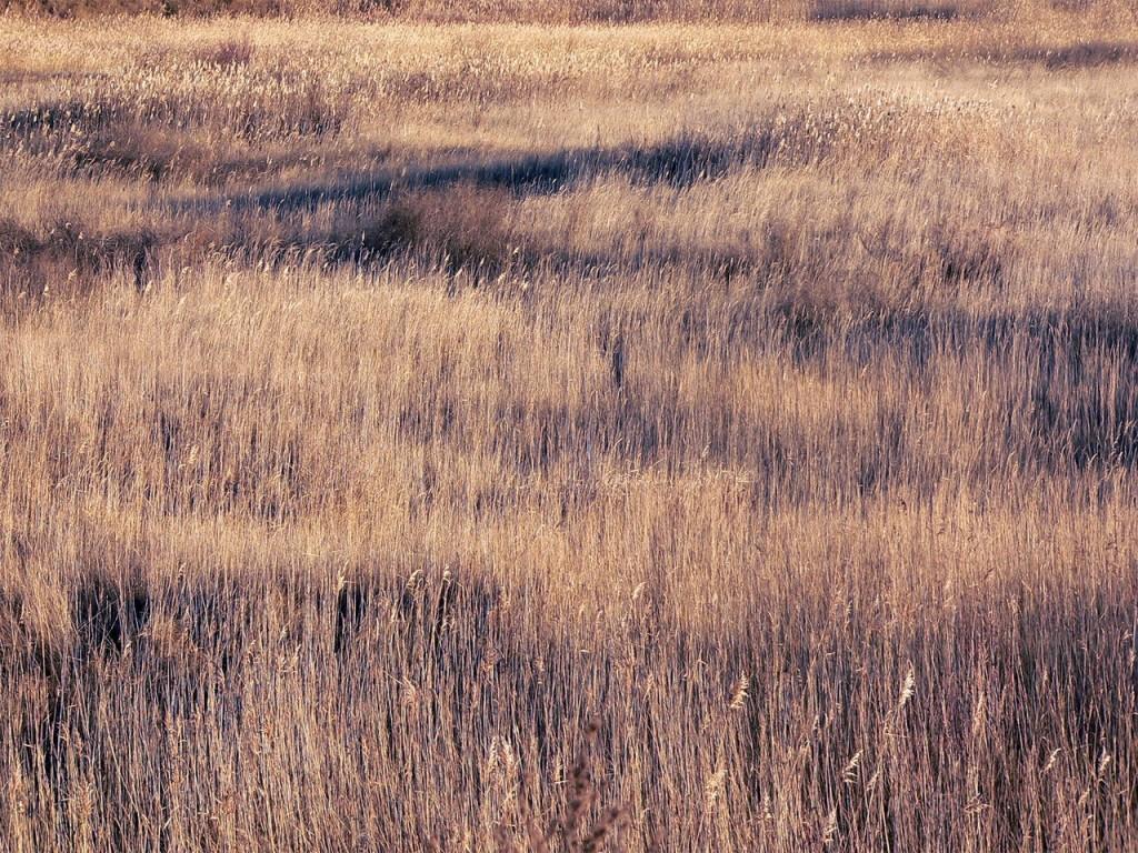 Nawozy granulowane na pola golfowe