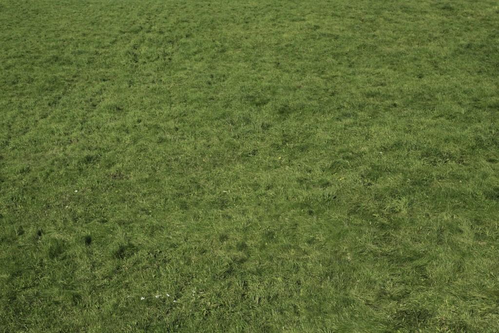 Usuwanie chwastów z trawnika